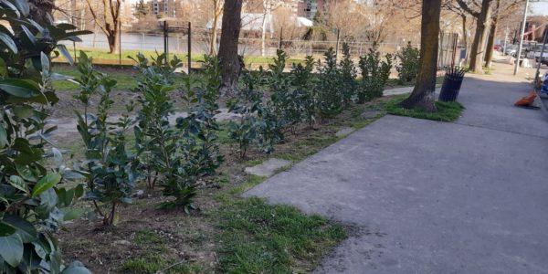 Piantumazioni 2021: nuovi alberi e piante in città
